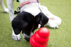 Interactive Dog Toy - Kong Wobbler
