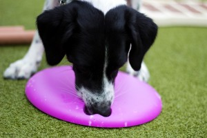 Interactive Dog Toy - nina ottosson toy